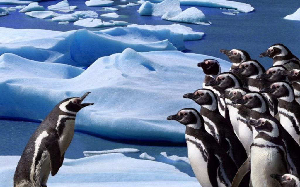 image of a penguin talking to a lot of other penguins